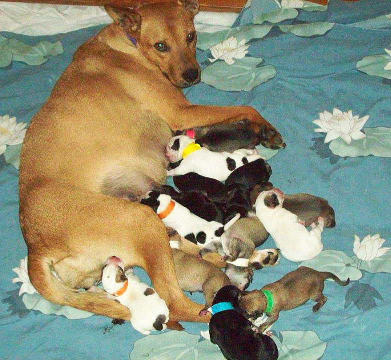 mom and pups2