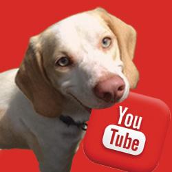 youtube dog