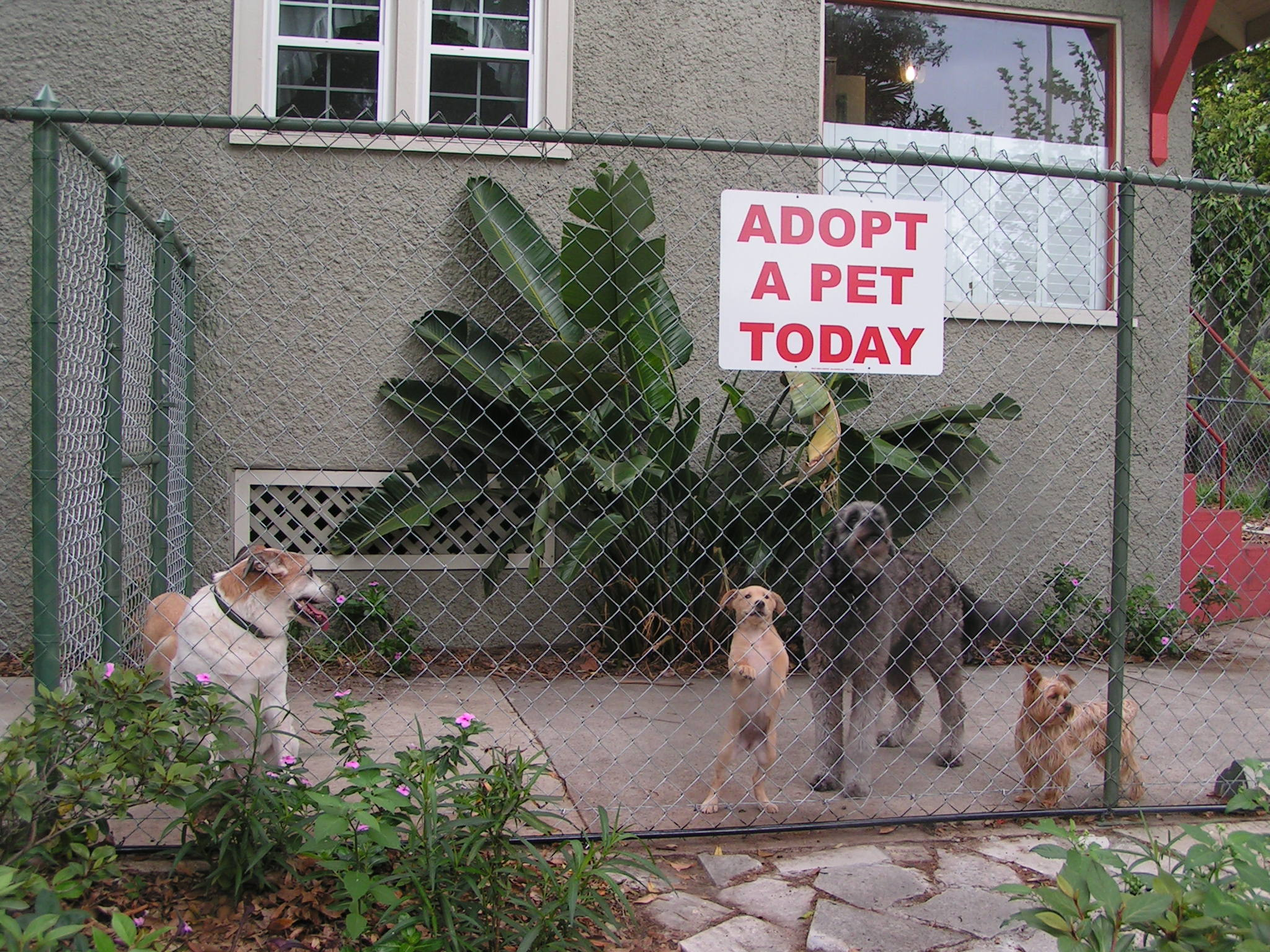 adopt promo dogs