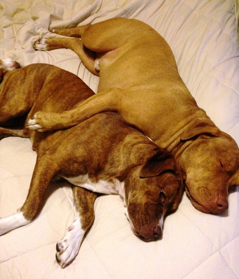 kimmie & copper hugging