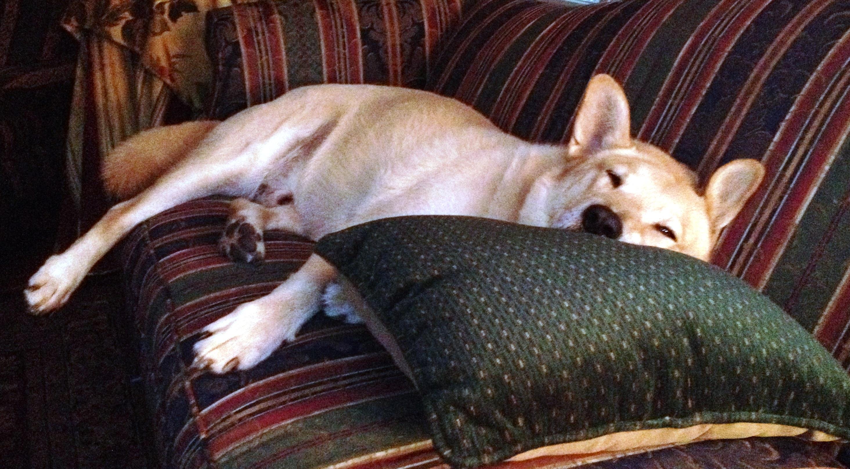 Addie Too on sofa