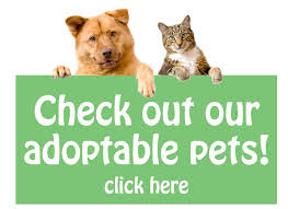 Adoptable Pets Graphic Button