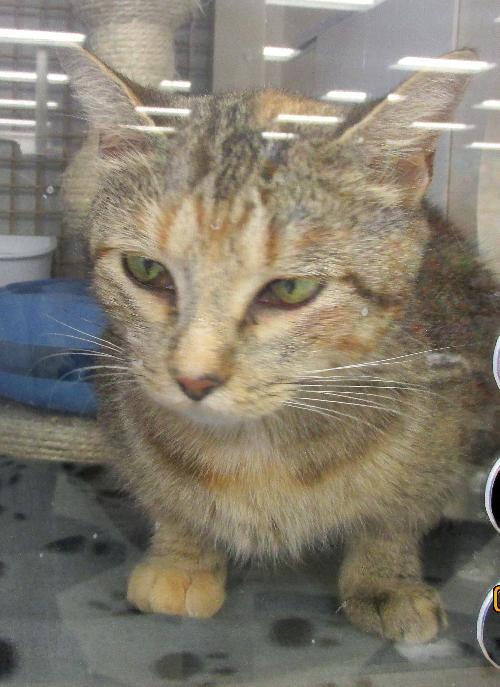 Lulu in Cat Habitat