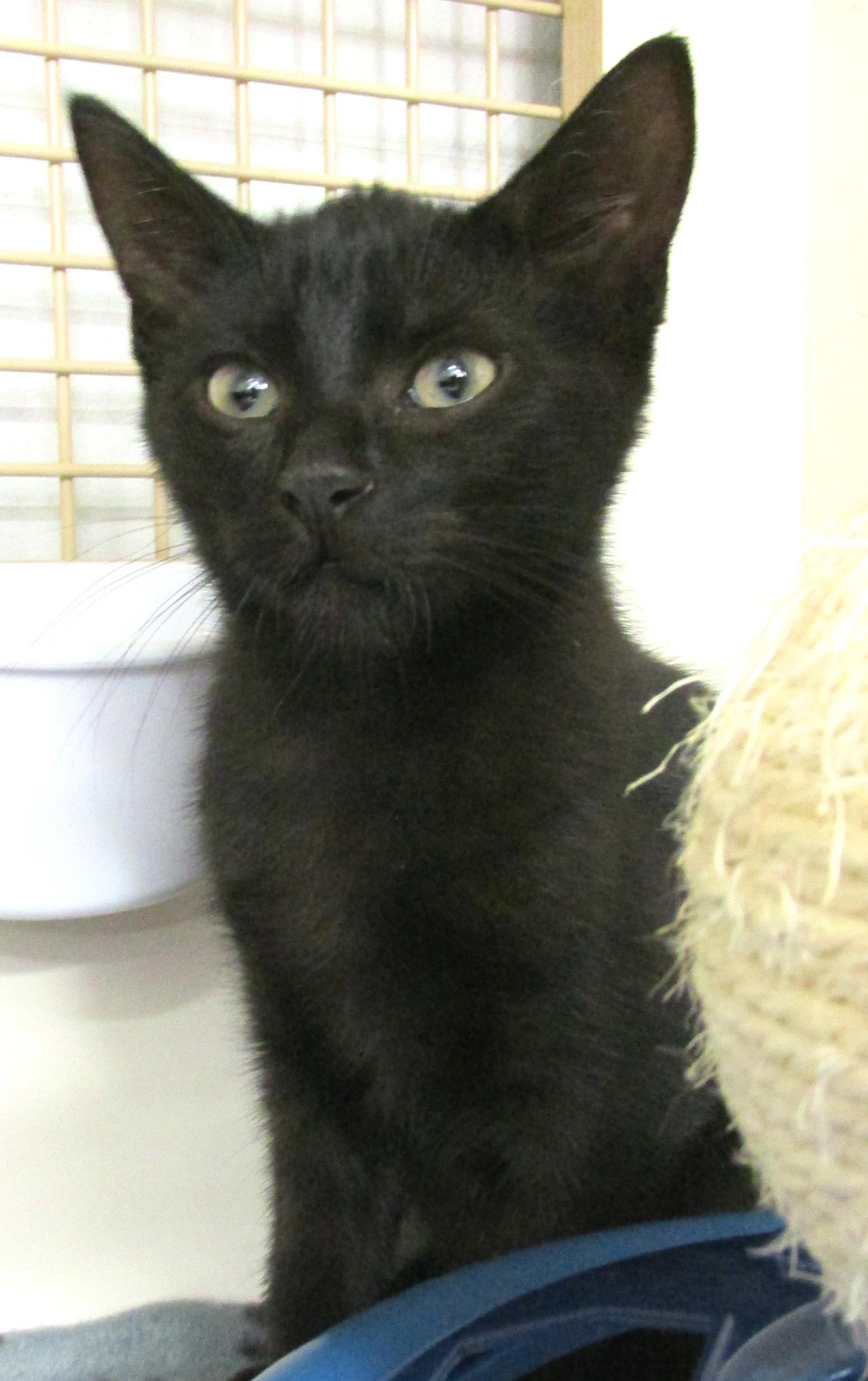 Landry Kitten