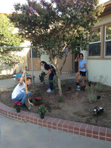 Volunteers planting