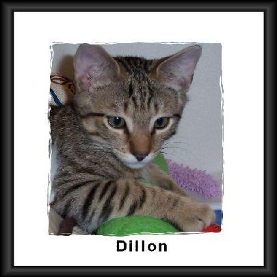 Dillon franed 2