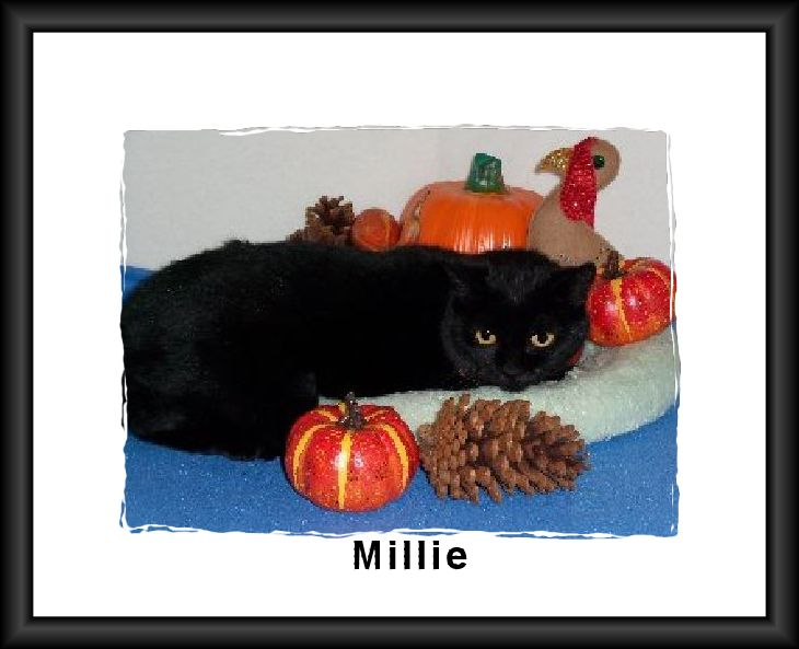Millie with Frame