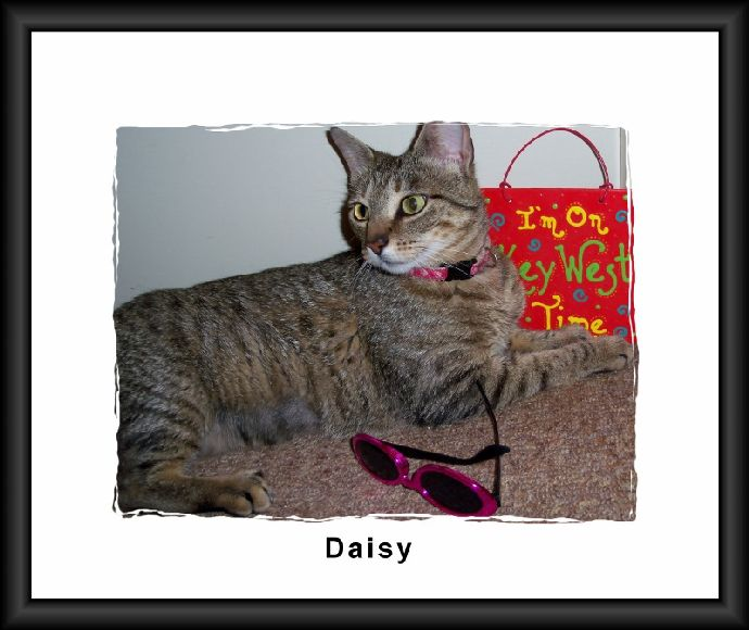 Daisy with Frame