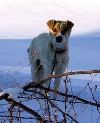 Dogs Deserve Better