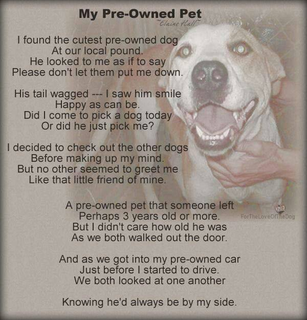 Pre owned pet