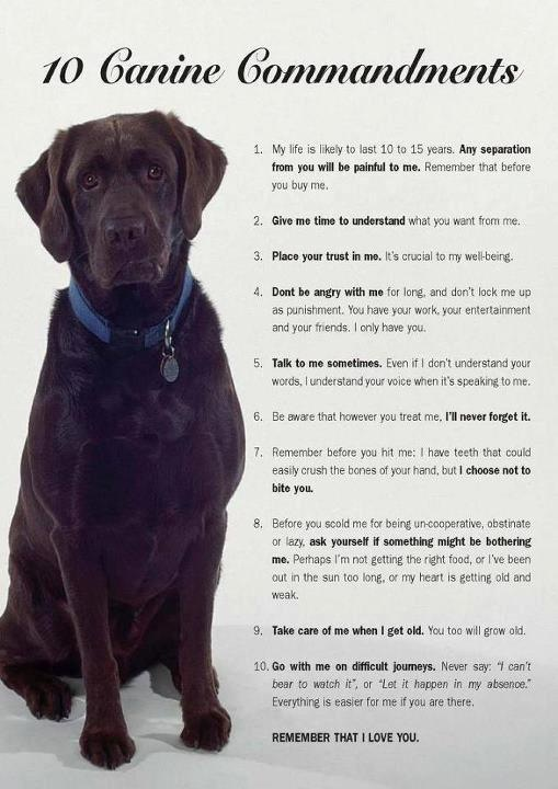 canine Commandments