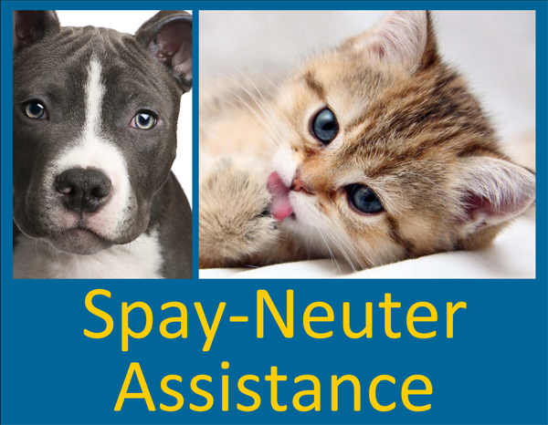 Spay-Neuter Button