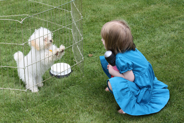 Little girl and little dog