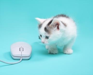 computer kitten