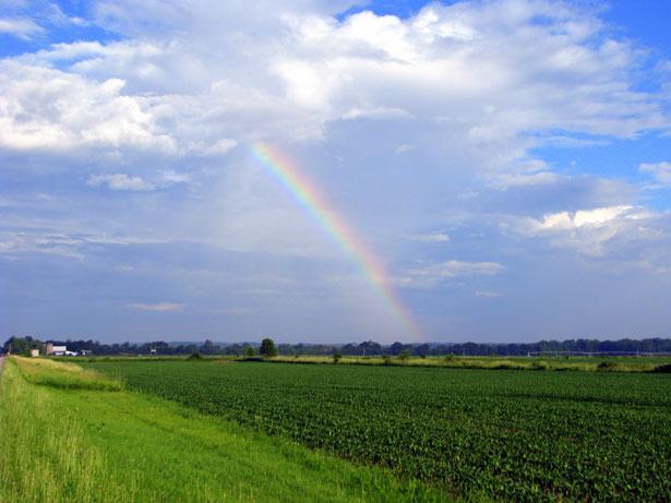 Rainbow_Field