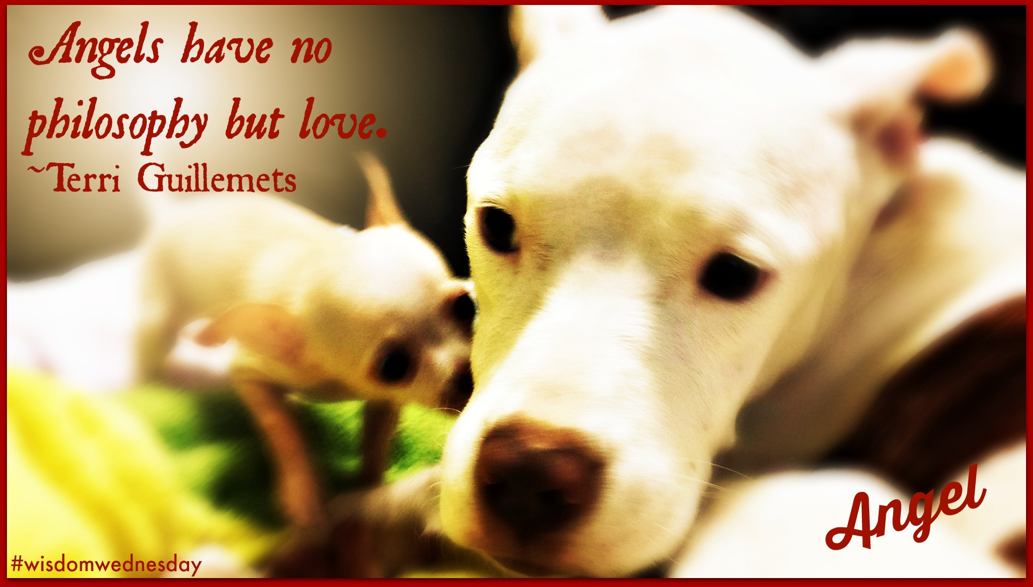 Adoption information 2nd chance dog rescues adoption policy is much different than most rescues we dont adopt our dogspups at the initial meetgreethome check m4hsunfo