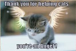 thank you angel 2