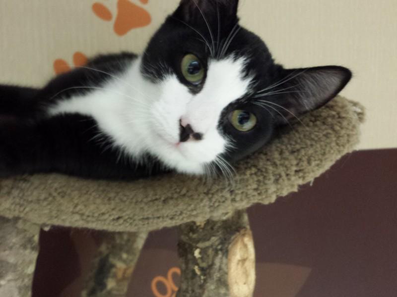 adoptable cat 2