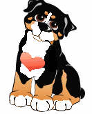 bernese w heart