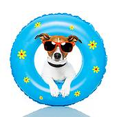dog with float tube and sunglasses