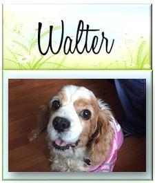 Walter26