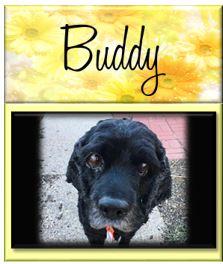 Buddy24