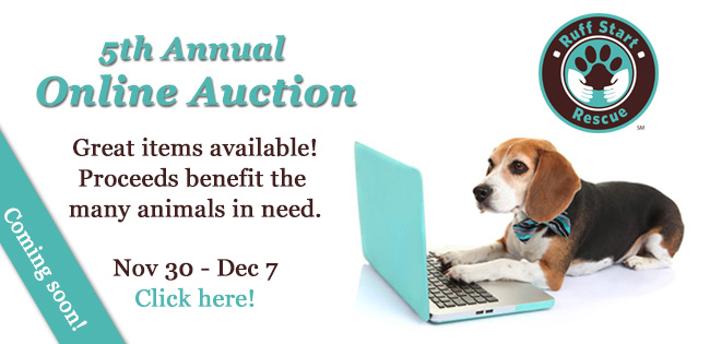 Our 5th Annual Silent Auction is Coming Soon