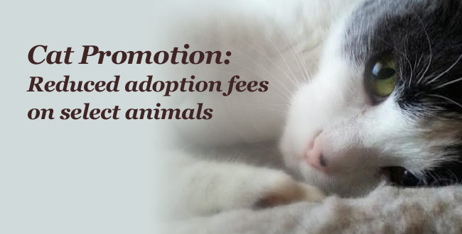 Cat Promotion: Reduced rates on select animals