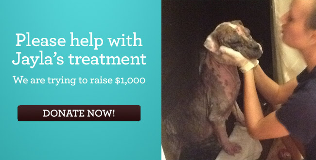 Please help with Jayla's treatment We are trying to raise $1,000 - DONATE NOW