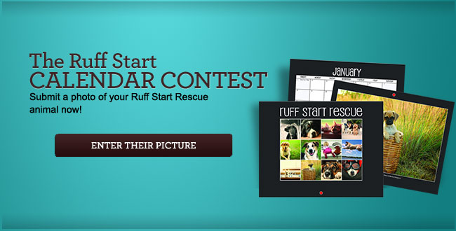 The Ruff StartCalendar Contest - Submit a photo of your Ruff Start Rescue animal now!
