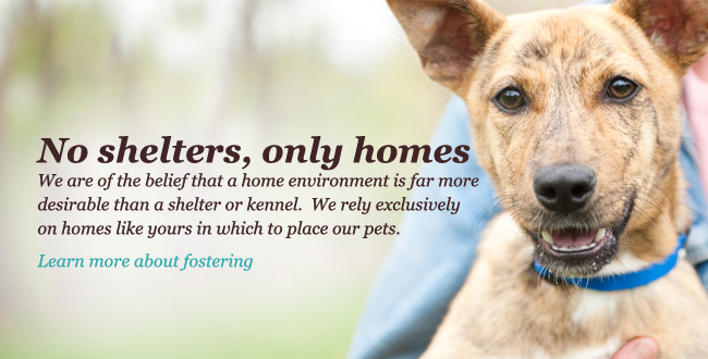 No shelters. Only homes. We are of the belief that a home environment is far more desirable than a shelter or kennel.  We rely exclusively on homes like yours in which to place our pets. Learn more about fostering