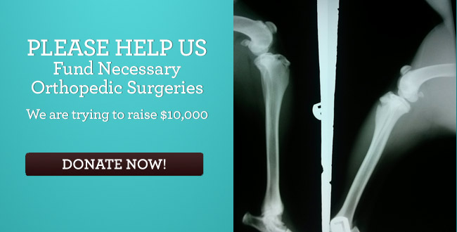 Please Help Us Fund Needed Orthopedic Surgeries We are trying to raise $10,000