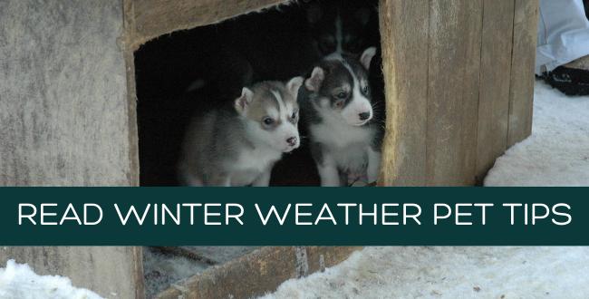 Winter weather pet tips