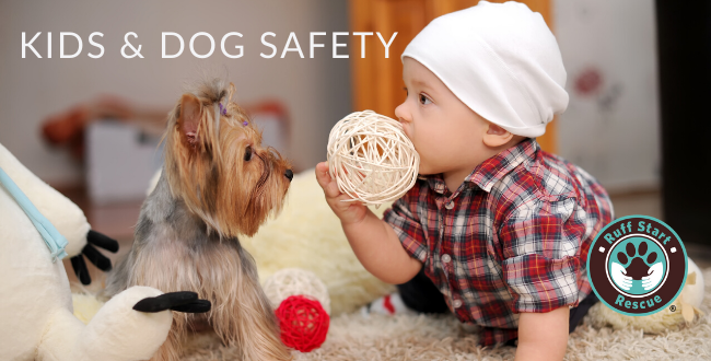 Kid and Pet safety