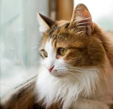 Web Image: Cat Pic