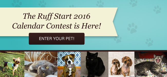 Enter The Ruff Start 2016 Calendar ContestPROCEEDS GO TO SUPPORT THE RESCUE