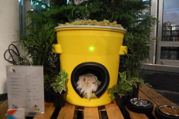 Feral cat house diy