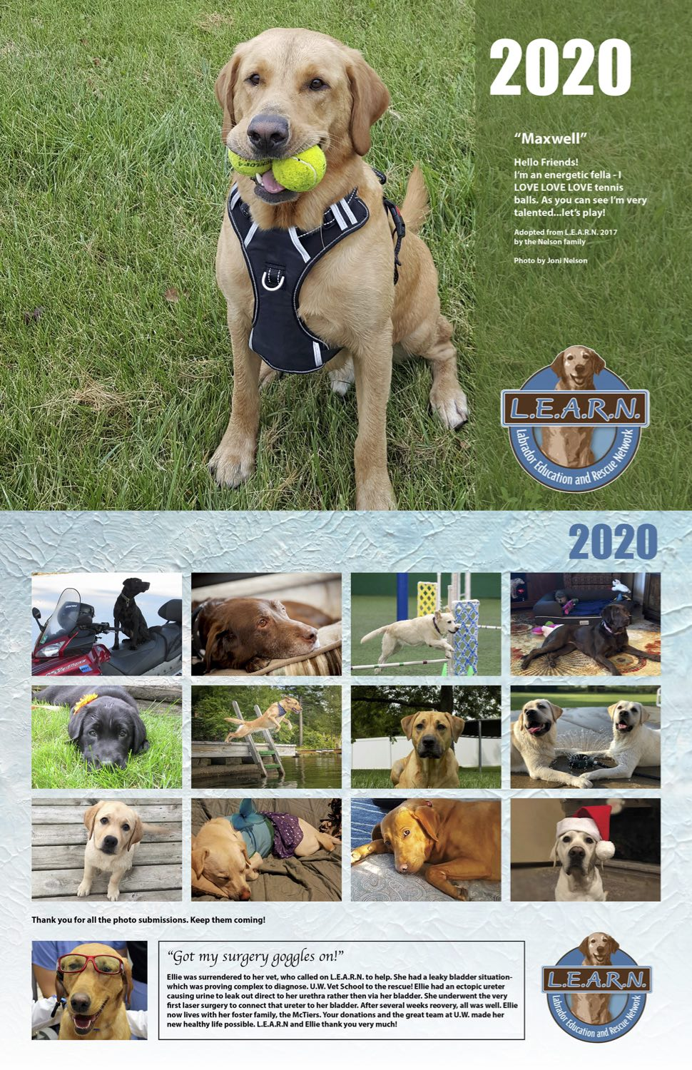 Lab Rescue and Adoption Wisconsin and Illinois| L E A R N