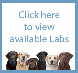 View LEARNs Available Labs
