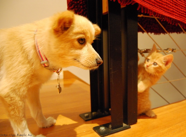 KittenWaitingForDog