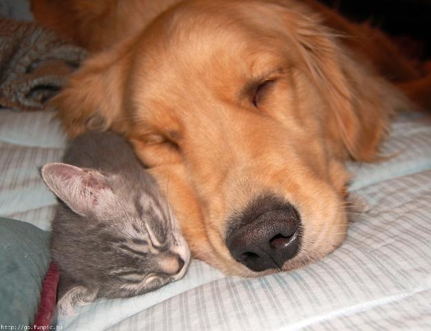 Kitten&DogSleep