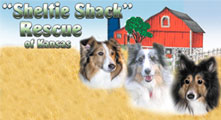 sheltieshack_small
