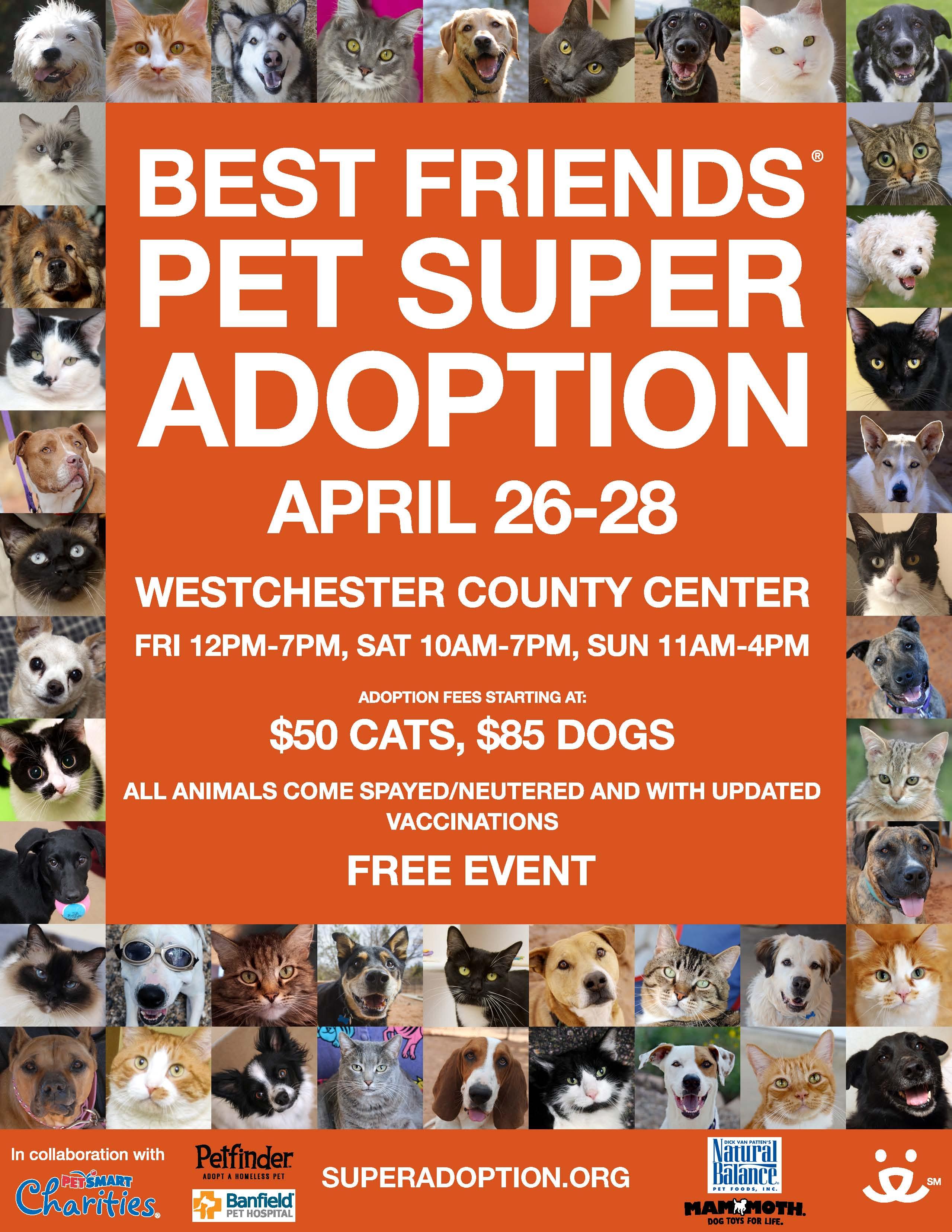 13.04.28 Super Adoption