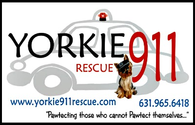 Yorkie911 Rescue Welcome