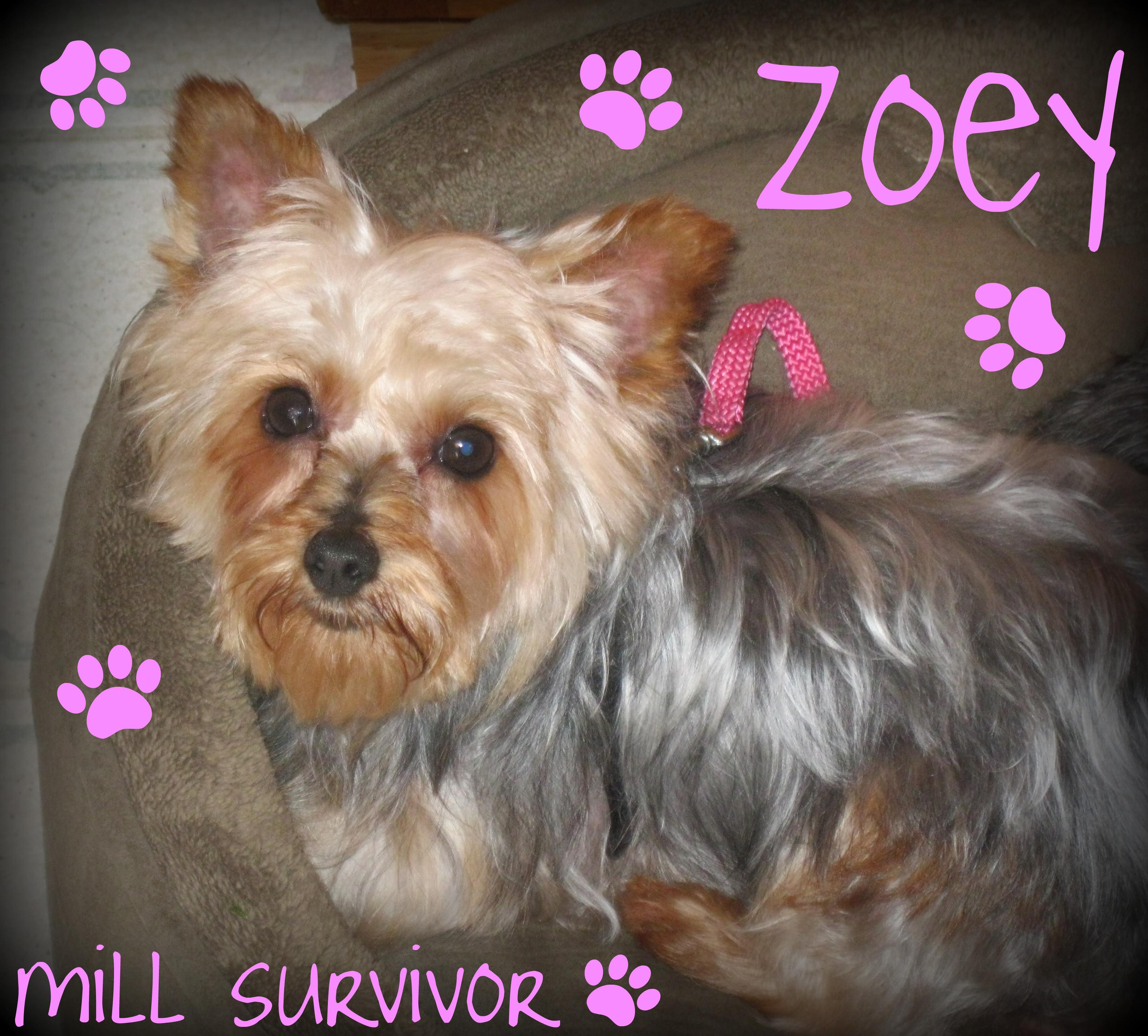 Puppy Mill Awareness