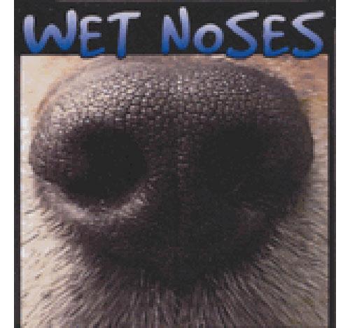 Sponsor Wet Nose