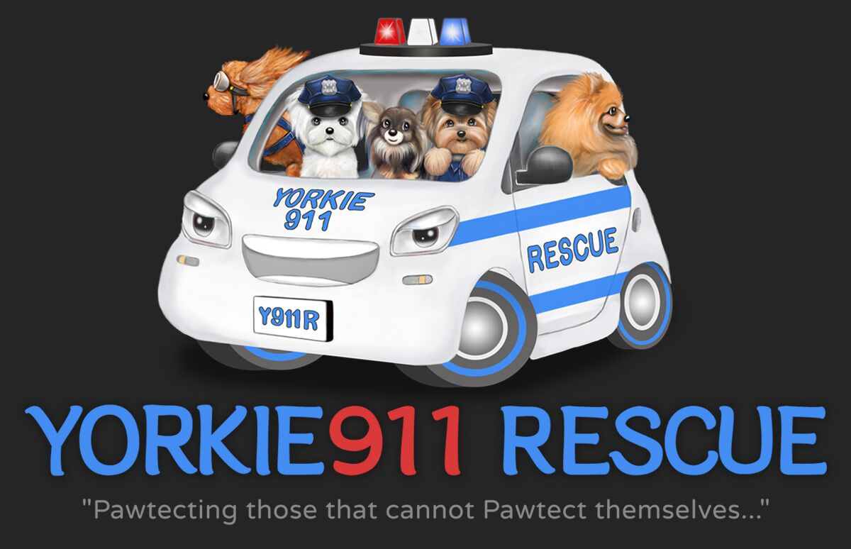 Yorkie911 Rescue | Welcome