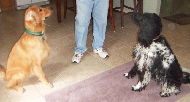Web Image: Baxter et Harley2