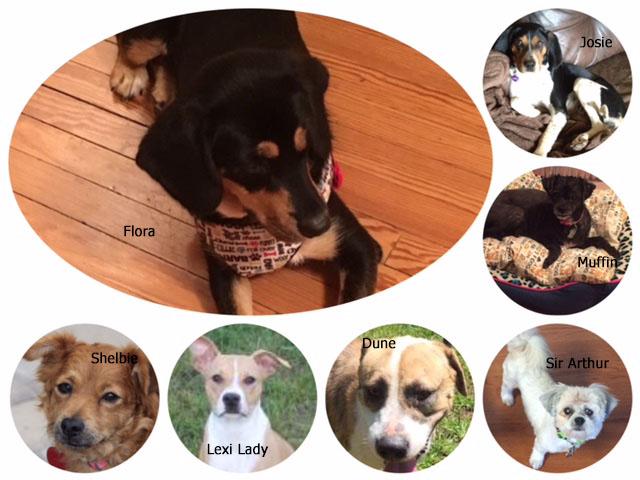 Bark Event Dogs 8-27-16