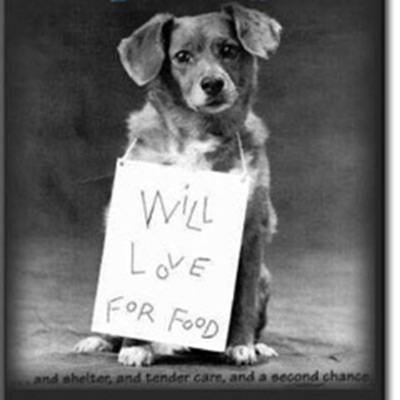 Web Image: Will Love For Food